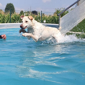 Piscina per cani Tabui (11).jpg