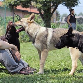 Foto puppy class Merate 13.jpg
