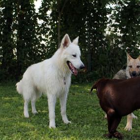 Foto puppy class Merate 17.jpg