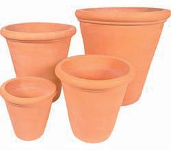 Terracotta Citrus pots