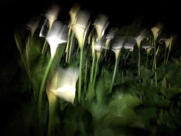 night blooms