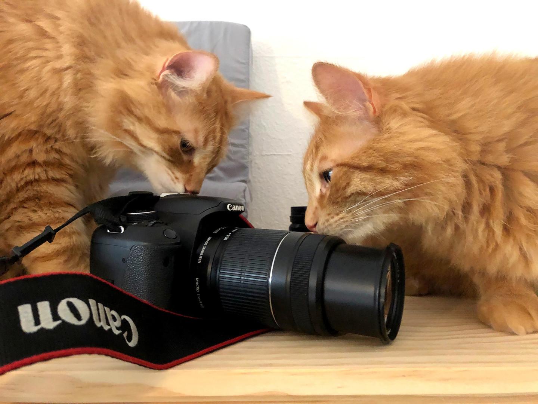 equipment inspectors