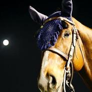 Race horse, Hollywood Park