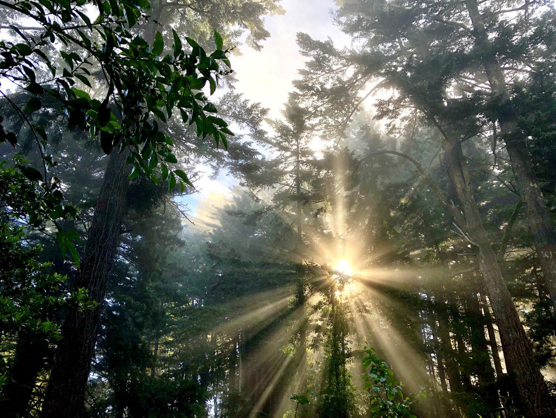 Sunrise in Woodside