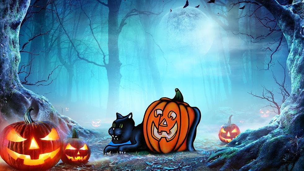 Cat around Pumpkin
