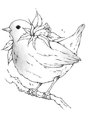 第8章  指路的知更鳥