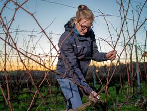 Perey Vignerons-Encaveurs - vigne