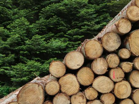 Le choix du bois suisse
