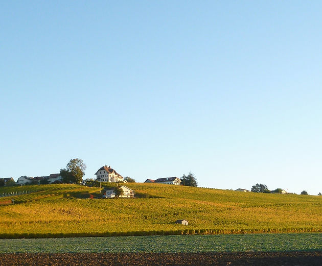 Perey Vignerons-Encaveurs - Domaine des Abbesses