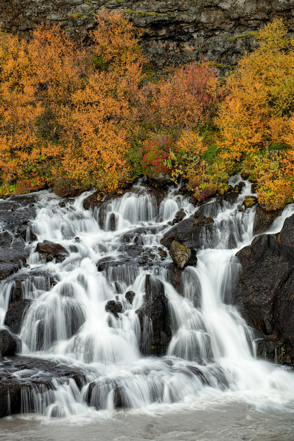 Fall Colors at Hraunfossar