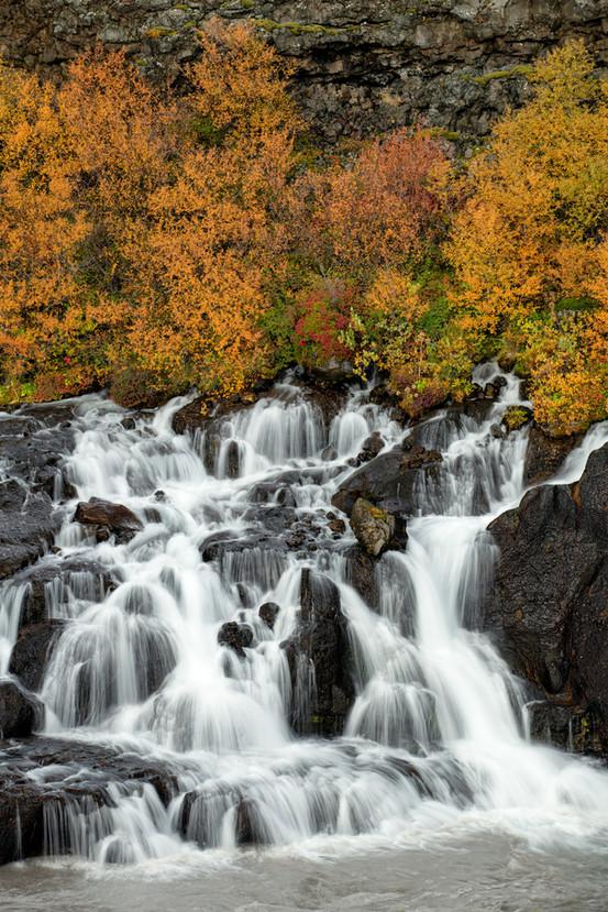 Fall Colors at Hraunfossar