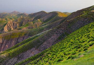 Green-rolling-judean-hills.jpg.1125x0_q7