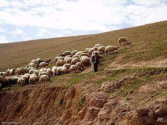 shepherd-in-wilderness[1].jpg