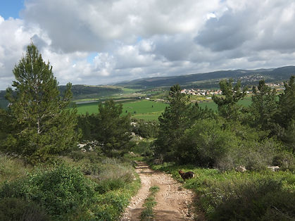 Country_road_near_Aderet,_Israel._March_