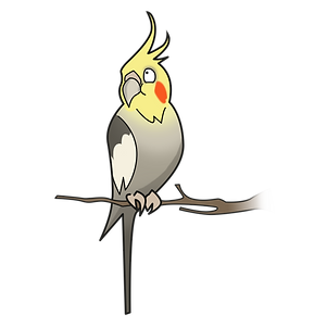 Cockatiel drawing