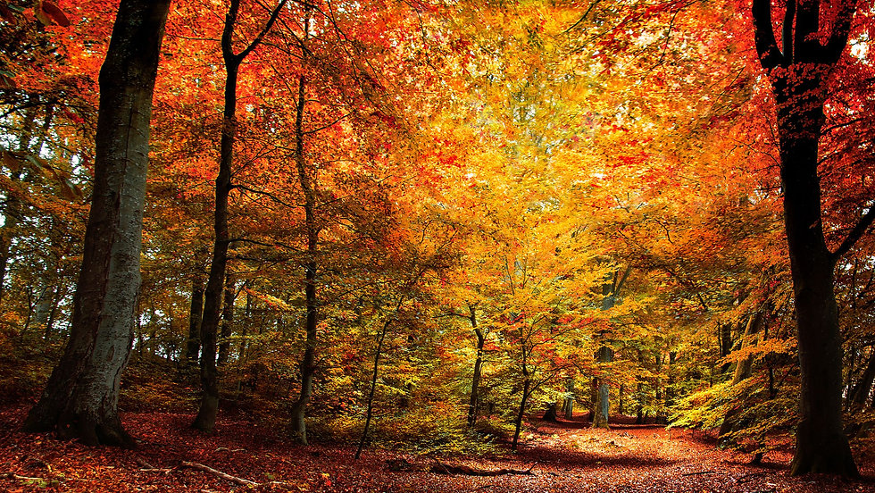 Fall Path.jpg