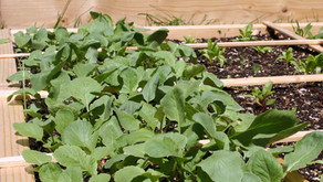 Eat Your Greens and Make Your Beds!