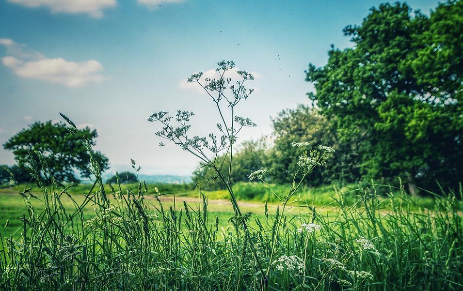 nature (16).jpg