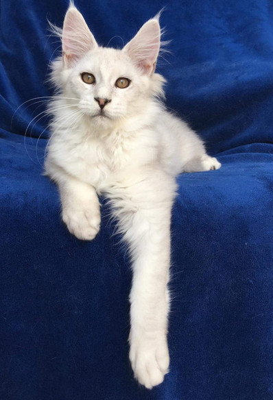 WhatsApp Image 2019-02-19 at 18.54.37 (5