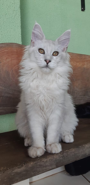 WhatsApp Image 2019-02-19 at 17.35.34 (4