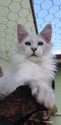 WhatsApp Image 2019-02-19 at 17.38.30 (6