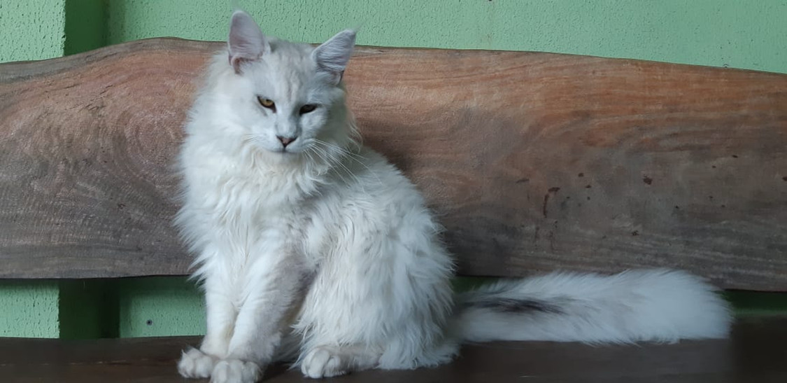WhatsApp Image 2019-02-19 at 17.35.30.jp