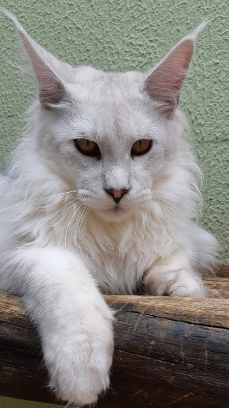 WhatsApp Image 2019-02-19 at 17.35.33 (4