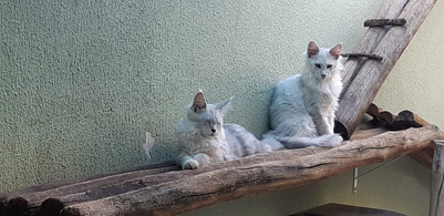 WhatsApp Image 2019-02-19 at 17.38.29 (7