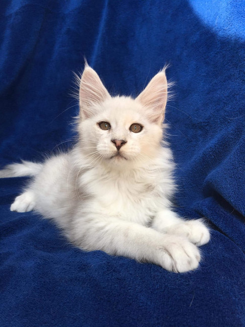 WhatsApp Image 2019-02-19 at 18.54.37 (1