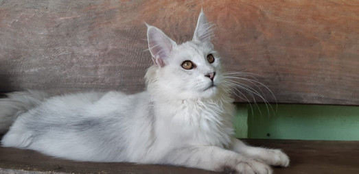 WhatsApp Image 2019-02-19 at 17.38.29.jp