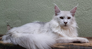 WhatsApp Image 2019-02-19 at 17.35.33 (3