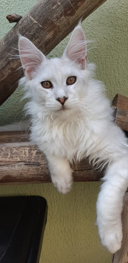 WhatsApp Image 2019-02-19 at 17.38.30 (4