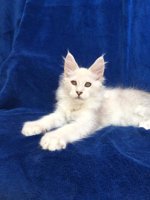 WhatsApp Image 2019-02-19 at 18.54.37 (2