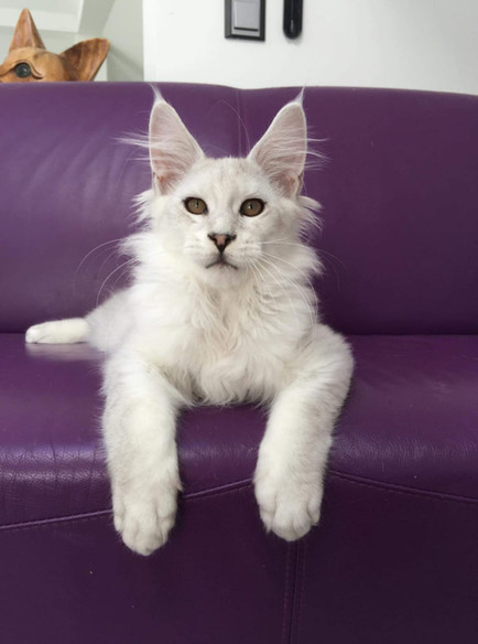 WhatsApp Image 2019-02-19 at 18.54.37 (6