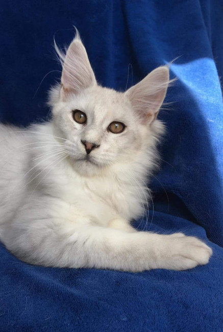 WhatsApp Image 2019-02-19 at 18.54.37 (4