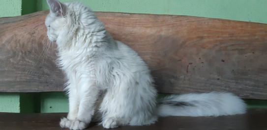 WhatsApp Image 2019-02-19 at 17.35.29.jp