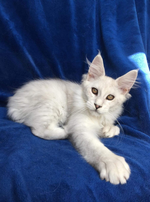 WhatsApp Image 2019-02-19 at 18.54.37 (3