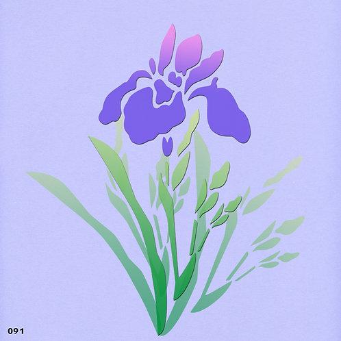 091 שבלונה פרחים -  אירוס הגלבוע