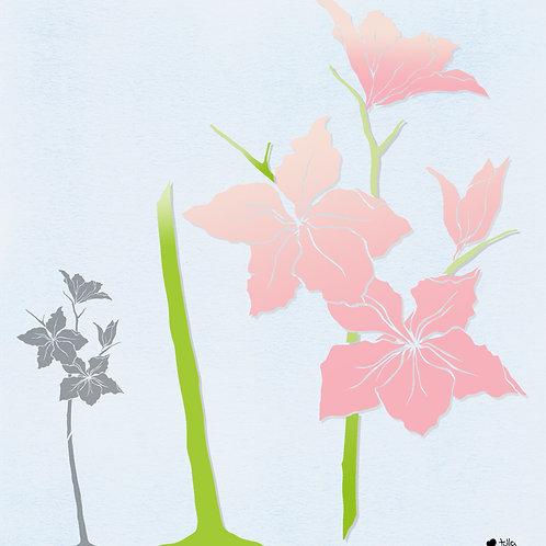 532 שבלונה פרחי בוהנייה