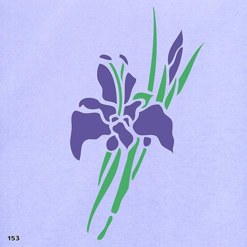153 שבלונה פרחים - אירוסים