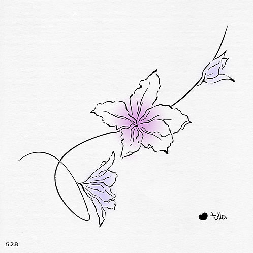 528 שבלונה פרחי בוהנייה