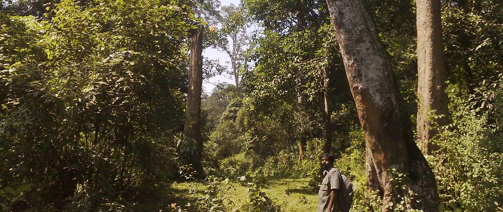 Evas Begleiter steht im Bambus-Wald