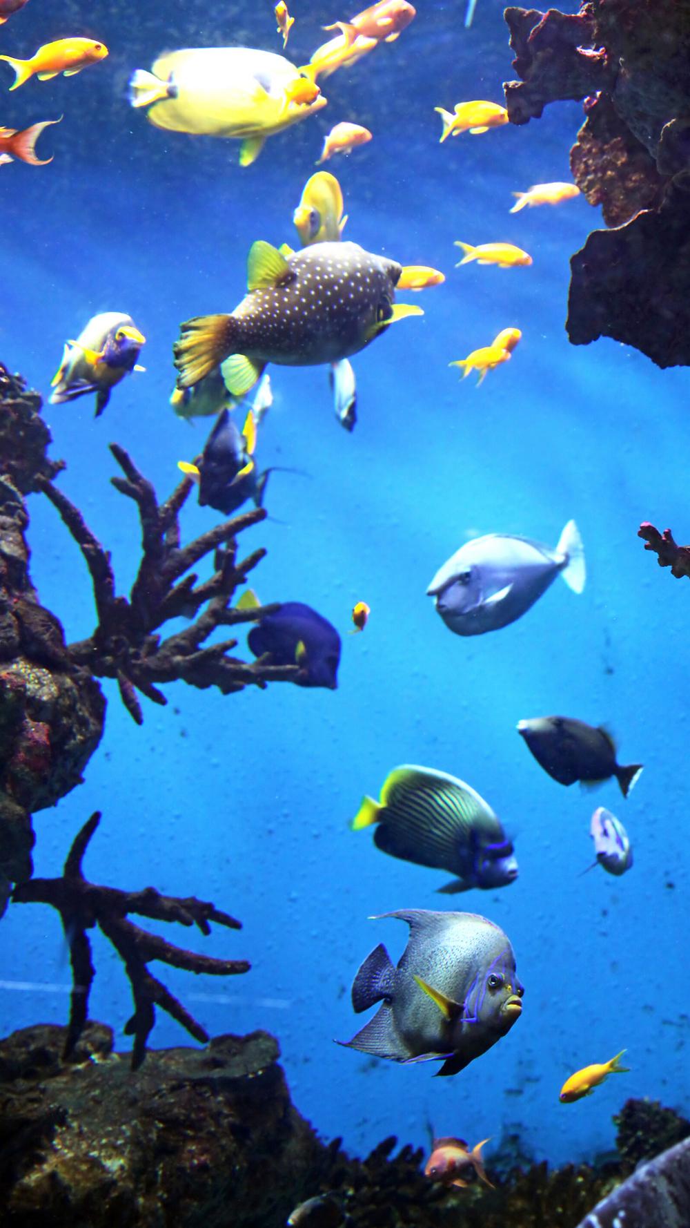 bunte Fische im glasklaren, blauen Wasser, Quelle: Canva