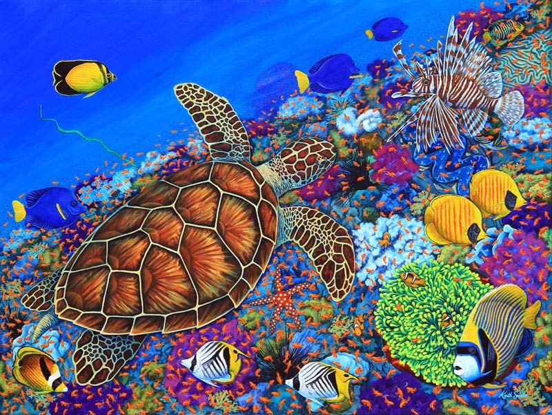 Turtle & the Reef