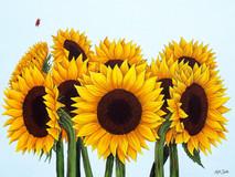 Sunflowers & Ladybirds