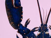 Blue Lobster - Pink