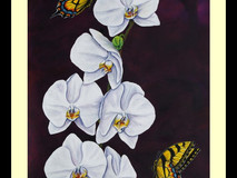 Swallowtails & Moth Orchid II