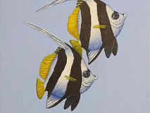 2 little Wimplefish