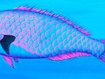 Parrotfish II