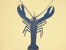 Plaice, Blue Lobster & Mackerel